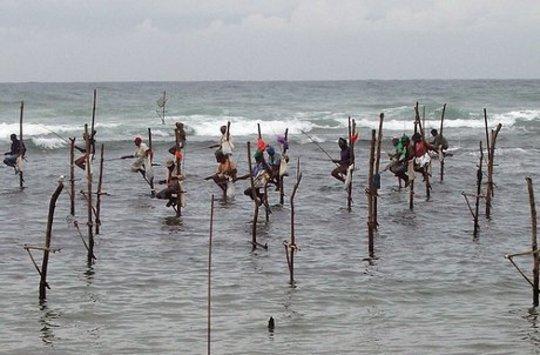 صيد الطوالة في سري لانكا.