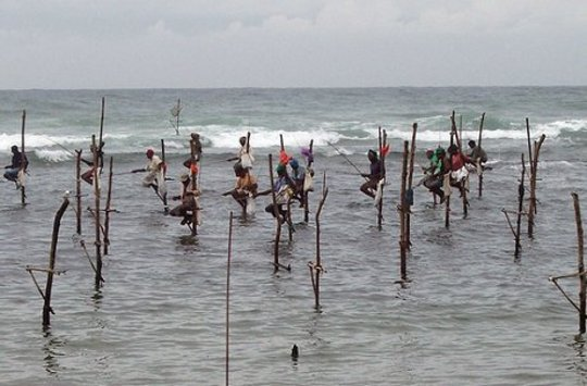 La pêche sur pilotis au Sri Lanka.