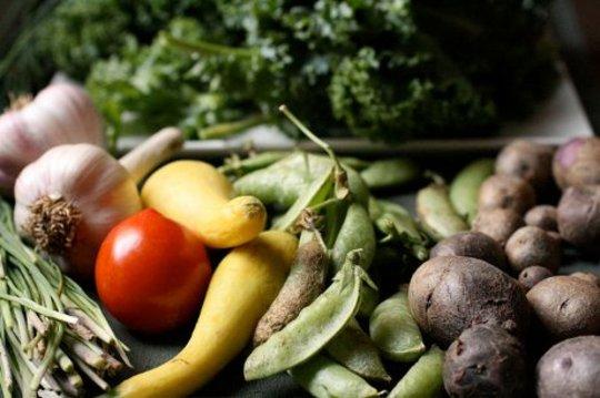 Ekologiska jordbrukstekniker är slutgap på konventionella utbyten