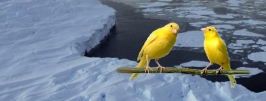 The Global Warming Canary In The Arctic Ice Melt