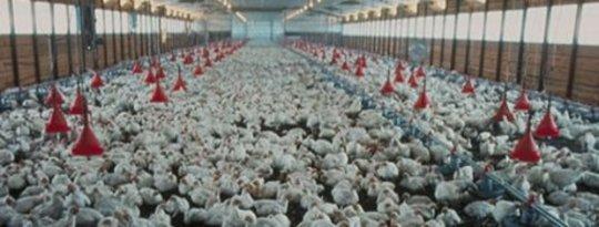 Les agriculteurs doivent supporter le risque de vendre de la nourriture sur le pas cher