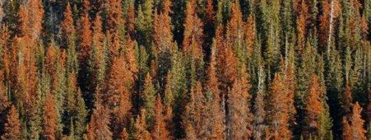 Perubahan Iklim Tutup & Peribadi