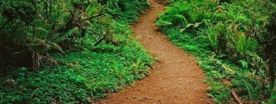 Le vrai chemin spirituel