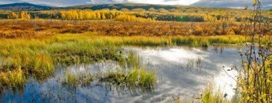 Les zones humides sont l'un des meilleurs investissements que nous pouvons faire