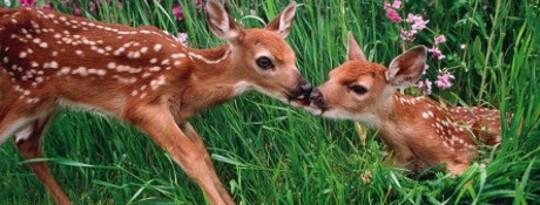 季节变化,但对野生动物的长期影响仍不明确