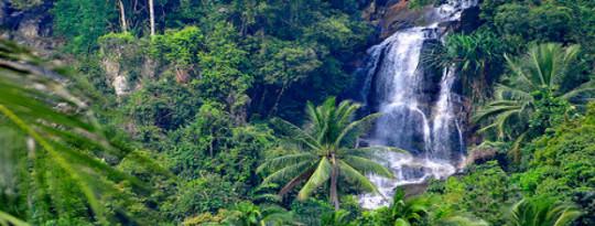 Tropical Trees Sumayaw 2 Bilyong Tonelada Ng Carbon Taunan