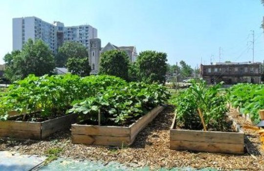 The Social and Nutrition Advantages of Urban Farming