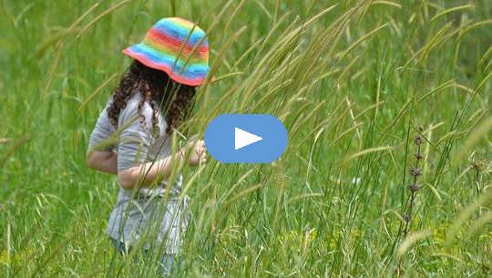 पर्यावरण की अनुकंपा और याद रखना कि प्रकृति हमारा घर है
