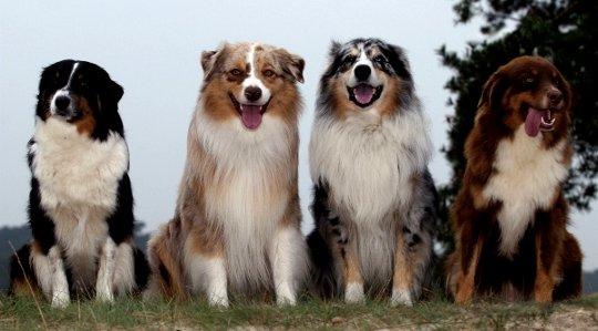 动物教我们灵性,提高我们的爱和体验快乐的能力