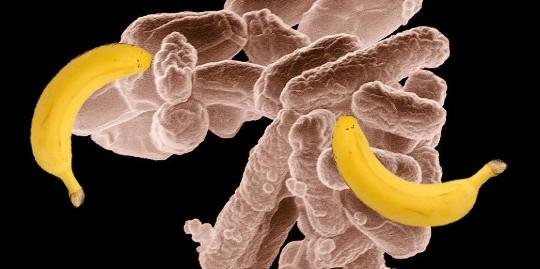 Bakit Ang Bakterya ay Maaaring Maging Sagot Sa Isang Kinabukasan na Walang Langis
