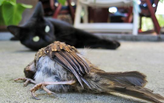 fåglar 0f feather2