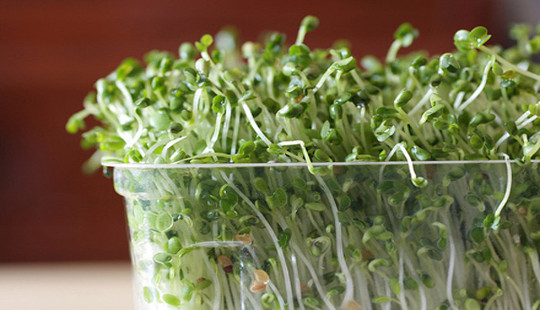 Maaari Isang Broccoli Sprout Pill Fight Cancer?