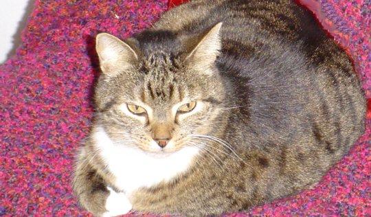 گربه ها و شما: قدرت های مخفی توانایی گربه ها