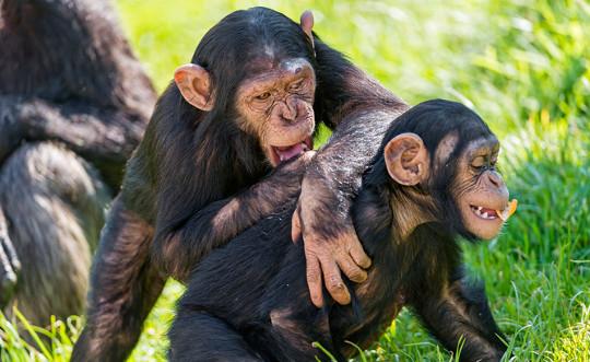 بازی سخت و کار سخت: راهنمای حیوانات برای زندگی خوب