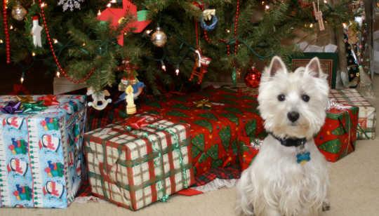 Weihnachtsgeschenke 12 22