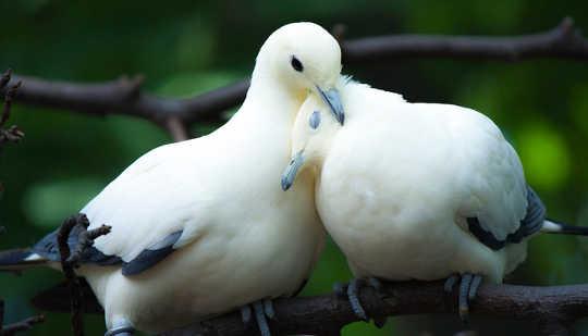 Bertemu dengan Binatang Liar yang Memaksa Pasangan Mereka Pertama