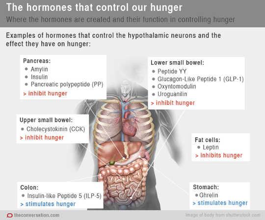 hormone2 9 26
