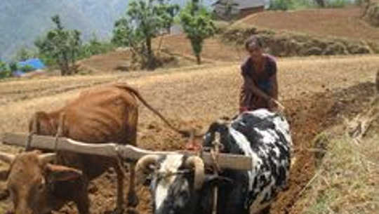 Ces Nepali Farmers utilisation A Renewable Supply Of Green engrais