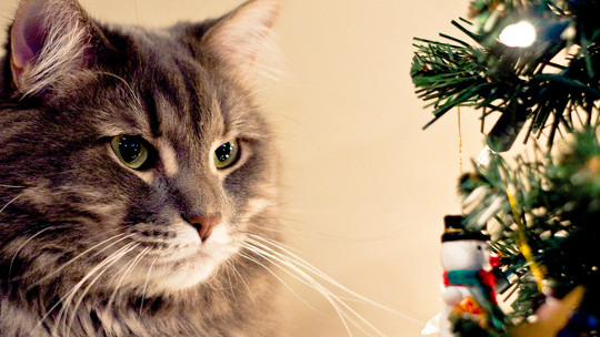 Spare A Thought For Our Furry Friends This Christmas