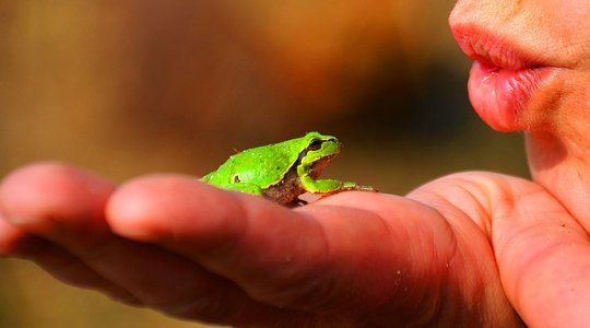 The Secret of a Great Marriage: From a Frog to a Prince?