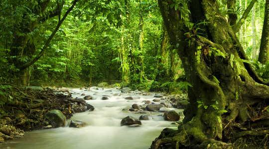 Gibt es in 2100 weiterhin tropische Wälder?