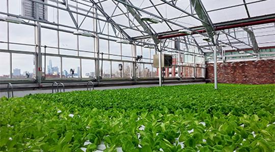 शहरी farming1 5 21