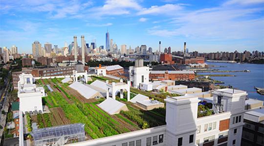 शहरी farming3 5 21