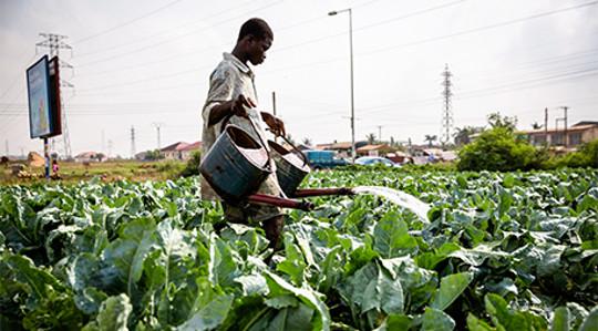 शहरी farming4 5 21