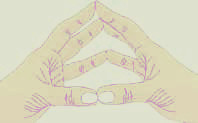 Zonas Reflexas das Mãos