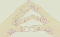 Hand Refleks Sones