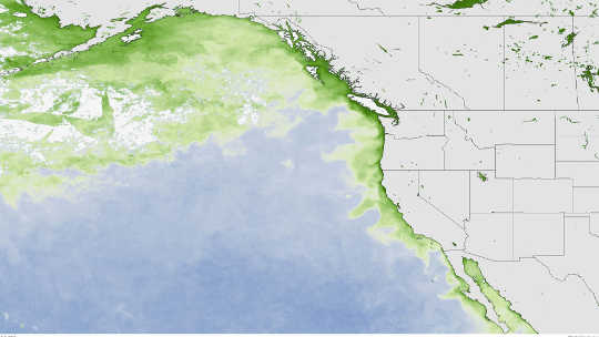 West Coast Toxic Algal Bloom Is Tied To The Pacific's Warm Blob