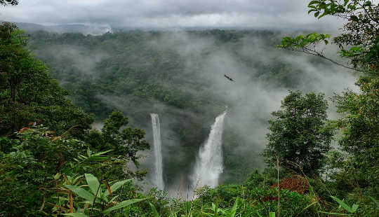 Los incendios forestales en la región amazónica están alcanzando niveles récord