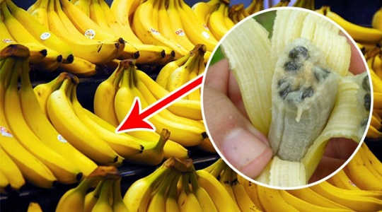 A Fungi Could Wipe Out Bananas In 5 To 10 Years