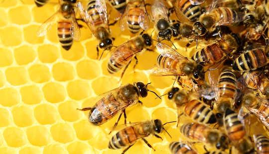 Mitä sosiaaliset hyönteiset voivat opettaa meille joustavasta infrastruktuurista