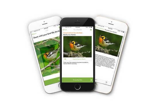 aplikasi burung 12 31