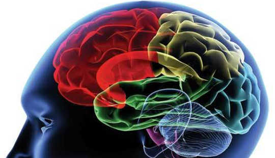 Ang Addiction A Brain Disease?