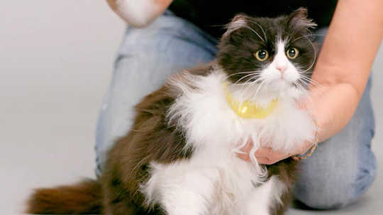 Could The Mystery Of The Meow Actually Be Solved By A New Talking Cat Collar?