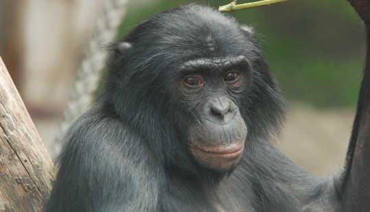 침팬지 10 10