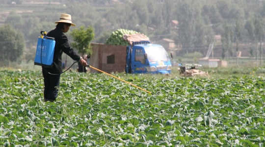 Un agriculteur en Chine répand des pesticides sur ses cultures. Image: IFPRI via Flickr