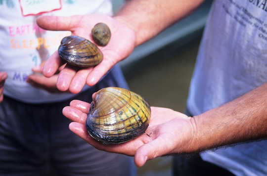 What 500-year-old Clams Can Tell Us About Climate Change