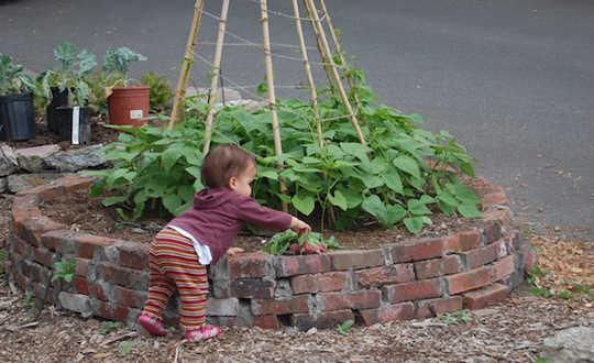 cộng đồng gardens5 8 16