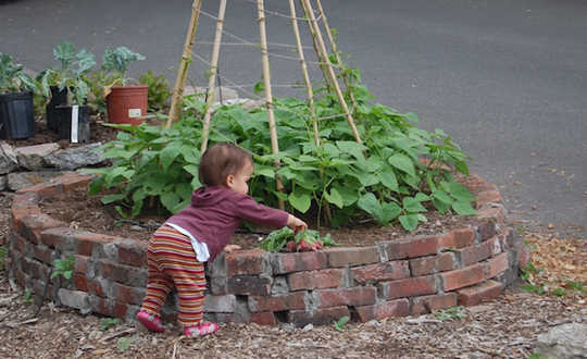 сообщество gardens5 8 16