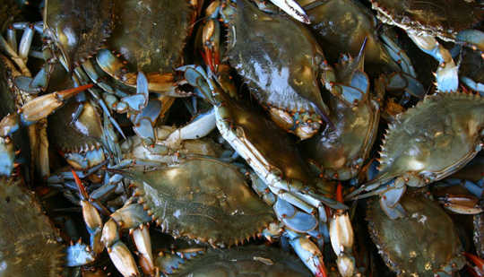 "Overcoming The ""Crab Box"" Effect In Your Life"