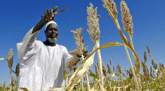 Liberalised food markets could ease the impacts of falling crop yields in southern regions such as Africa. Image: Fred Noy/UN Photo via Flickr