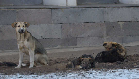 Left to their own devices, street dogs soon stop looking like distinct breeds. Andrey, CC BY
