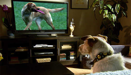 What Dogs See When They Watch Television