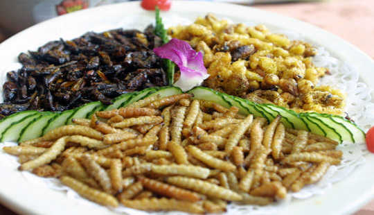 What Is It That Puts People Off Eating Insects?