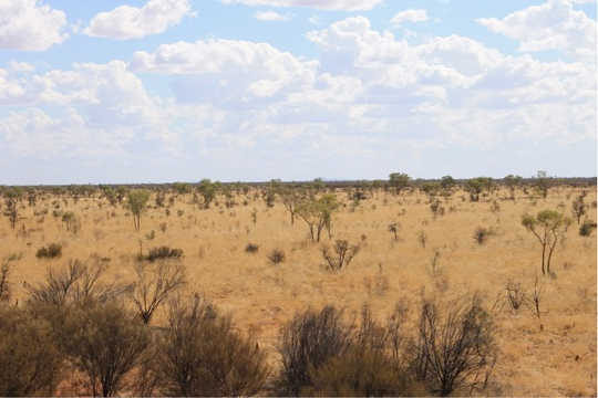 Australia's dry ecosystems show dramatic changes between wet and dry. This is spinifex grassland during the dry. Spinifex covers around 20% of Australia's land area. James Cleverly, Author provided