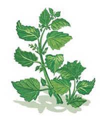 편집 가능한 weeds3 8 23