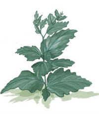 편집 가능한 weeds4 8 23